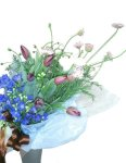 画像5: 紫のチューリップとデルフィニウムの花束 (5)