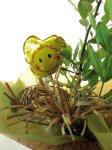 画像4: 月桂樹(ローレル)の鉢植えギフト (4)
