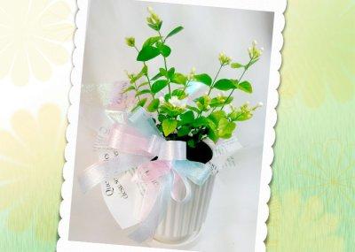 画像3: ジャスミンの鉢植えギフト