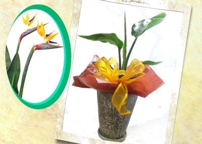 画像1: ストレリチアの鉢植えギフト