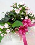 画像5: 匂い桜の鉢植えギフト (5)