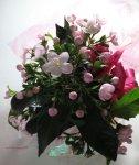 画像4: 匂い桜の鉢植えギフト (4)