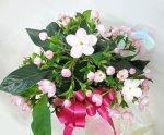 画像1: 匂い桜の鉢植えギフト (1)