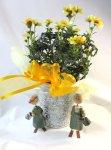 画像4: ウインターコスモスの鉢植えギフト (4)