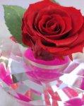 画像2: プリザーブドの赤いバラ〜Applause (2)