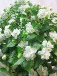 画像3: エキザカムの鉢植えギフト (3)