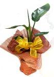 画像1: ストレリチアの鉢植えギフト (1)
