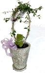 画像4: オリーブと、青い小鳥と、モスベアーの鉢植えギフト (4)