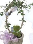 画像3: オリーブと、青い小鳥と、モスベアーの鉢植えギフト (3)