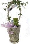 画像1: オリーブと、青い小鳥と、モスベアーの鉢植えギフト (1)