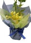 画像2: 立葵(ホリホック)の鉢植えギフト (2)