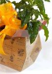 画像5: クロッサンドラの鉢ギフト (5)