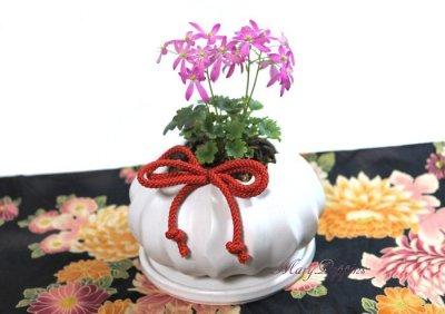 画像1: 大文字草の鉢植えギフト