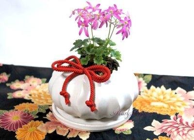 画像3: 大文字草の鉢植えギフト