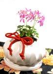 画像5: 大文字草の鉢植えギフト (5)