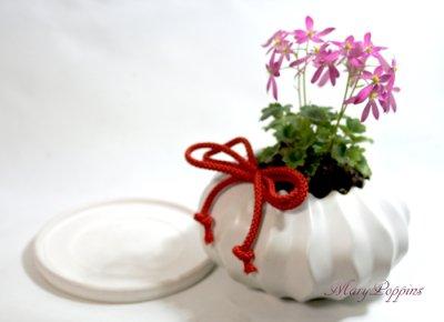 画像2: 大文字草の鉢植えギフト