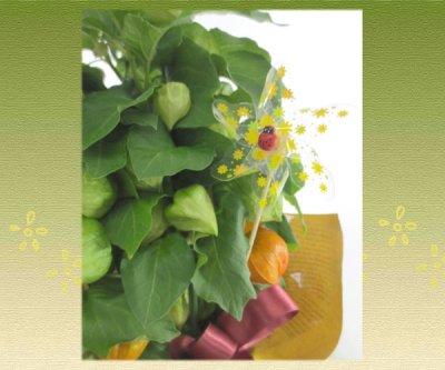 画像2: ほおずきの鉢植えギフト