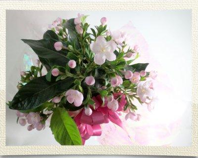 画像3: 匂い桜の鉢植えギフト