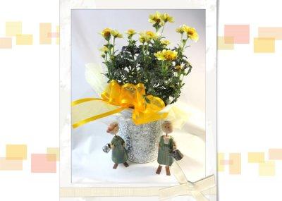 画像3: ウインターコスモスの鉢植えギフト