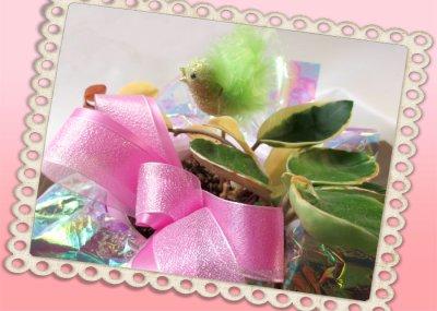 画像2: 桜蘭(サクララン)の鉢植えギフト