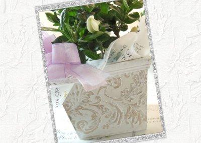 画像2: 梔子(クチナシ)の鉢植えギフト