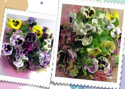 画像2: パンジーの花束〜Pure love