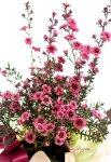 画像3: 御柳梅(ギョリュウバイ)の鉢植えギフト (3)