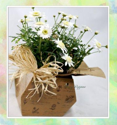 画像3: マーガレットの鉢植えギフト