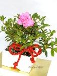 画像3: 盆栽風・皐月(サツキ)の鉢植えギフト (3)