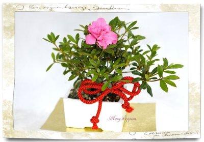 画像3: 盆栽風・皐月(サツキ)の鉢植えギフト