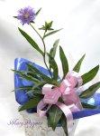 画像5: ストケシアの鉢植えギフト (5)