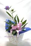 画像4: ストケシアの鉢植えギフト (4)