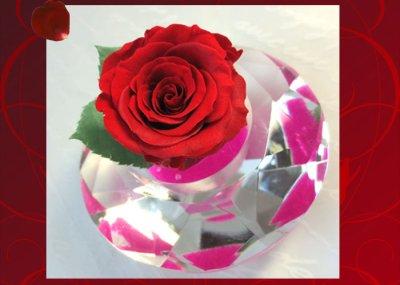 画像1: プリザーブドの赤いバラ〜Applause