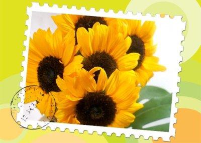 画像1: ひまわりの花束〜sunny