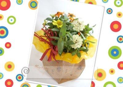 画像3: 百日草(ジニア)の鉢ギフト