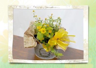 画像3: 百日草(ジニア)とメランポジウムの寄せ鉢ギフト