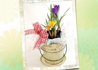 画像3: クロッカスの鉢植えギフト