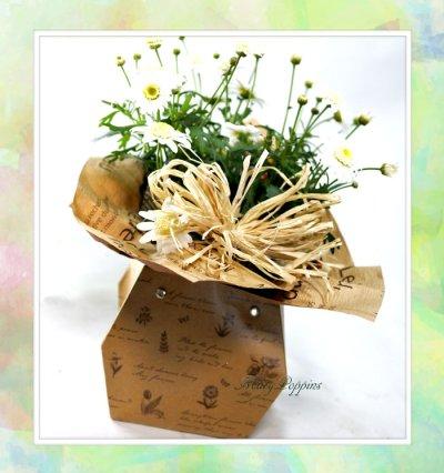 画像2: マーガレットの鉢植えギフト