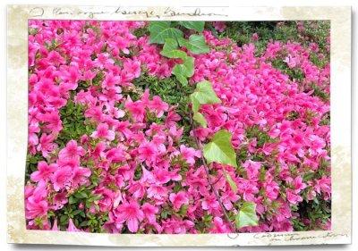 画像1: 盆栽風・皐月(サツキ)の鉢植えギフト