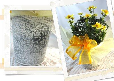 画像2: ウインターコスモスの鉢植えギフト
