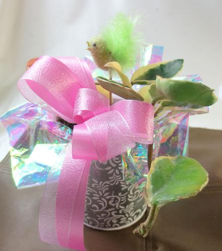 画像1: 桜蘭(サクララン)の鉢植えギフト (1)