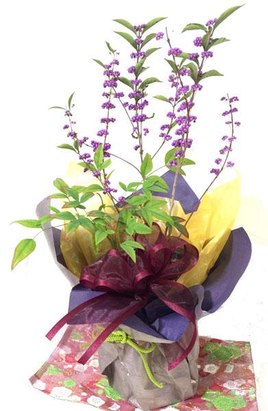 画像1: 紫式部と南天の寄せ植えギフト (1)