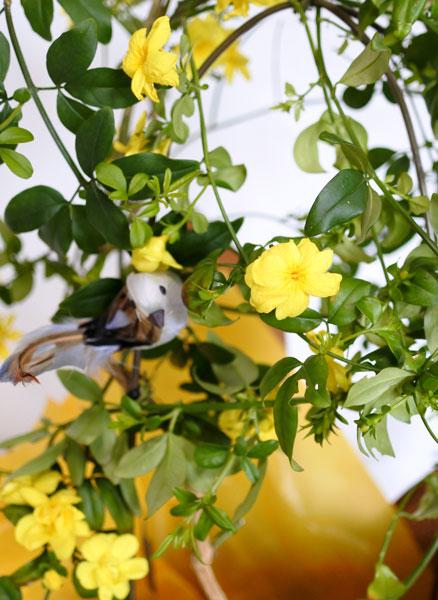 画像1: 黄梅(オウバイ)の鉢植えギフト (1)