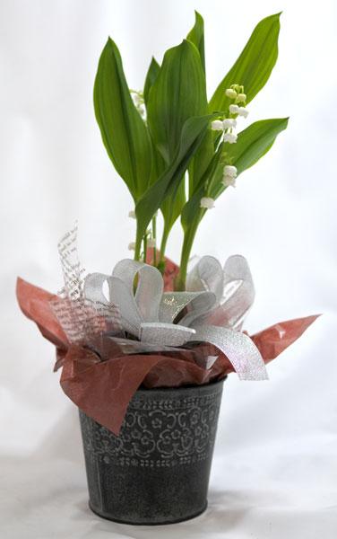 スズランの鉢植えギフト
