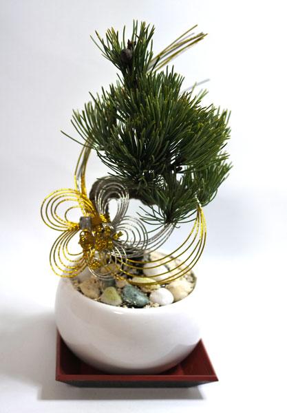 画像1: Bonsai-為松 (1)
