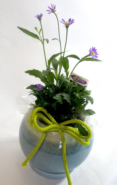 画像1: 都忘れの鉢植えギフト (1)