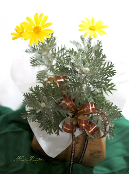 画像1: ユリオプスデージーの鉢ギフト (1)