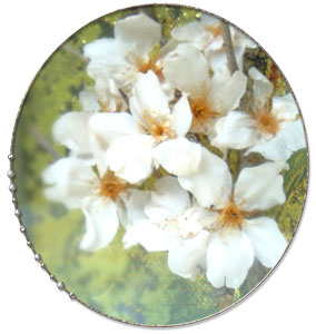 桜のプリザーブドフラワーアレンジ