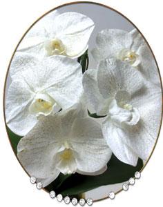 プリザーブドの胡蝶蘭