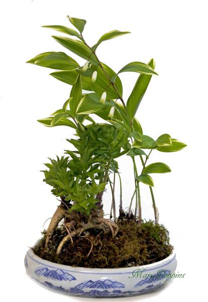 画像1: 桔梗と鳴子百合の盆栽風鉢植えギフト (1)